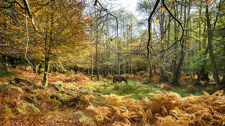 autumn-new-forest-holidays