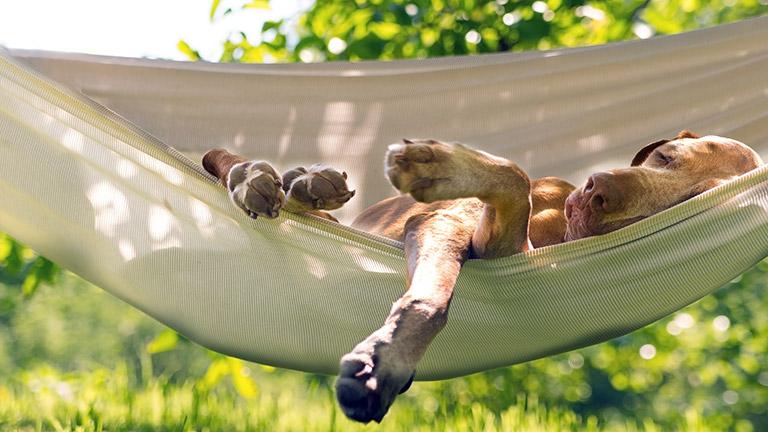 dog-sleeping-in-hammock
