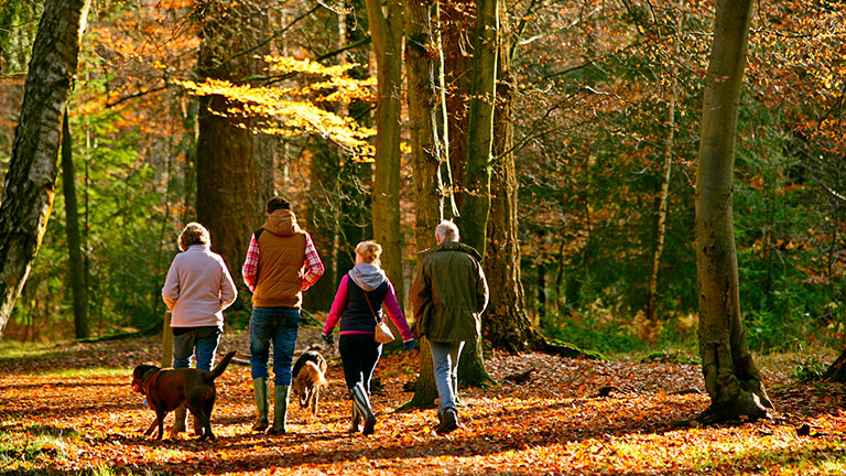 new-forest-family-dog-walk
