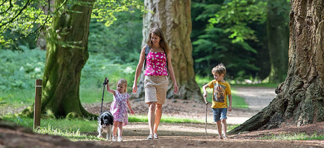 young-family-walking-in-new-forest