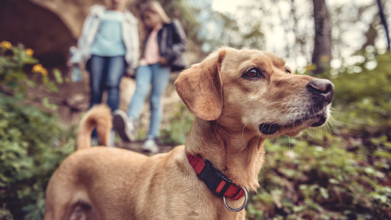 dog-friendly-holiday-cottages-new-forest