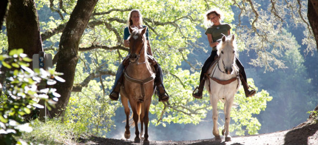 new-forest-horse-riding