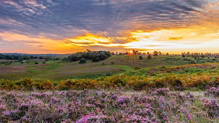 sunset-new-forest-heathland
